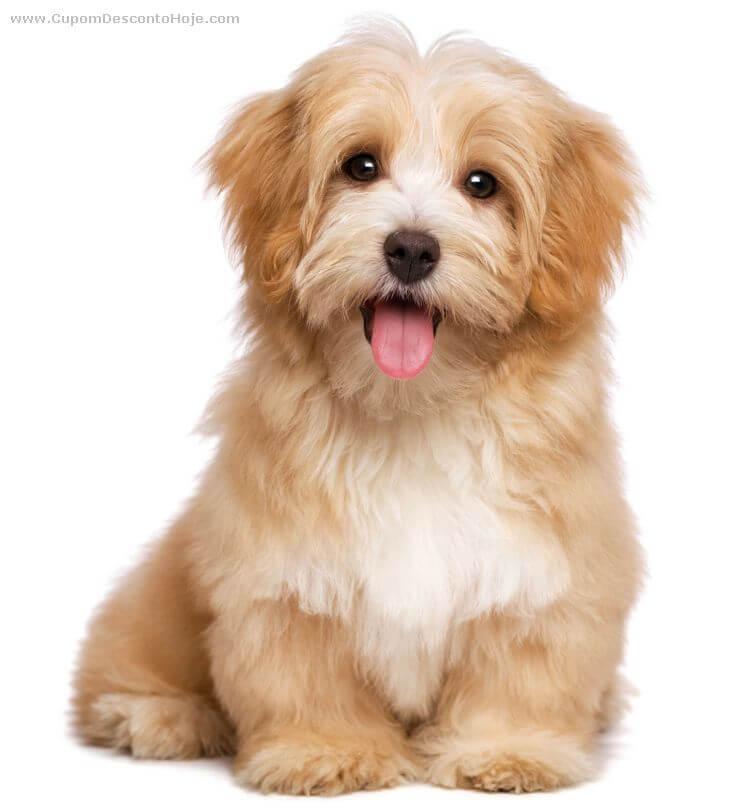 Quais os cuidados iniciais com seu filhote de cachorro