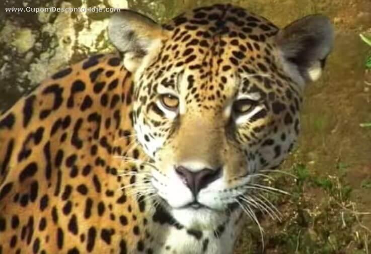 Você precisa conhecer o GramadoZoo! Parque Zoológico de Gramado RS